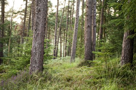 Tunstall Forest   Forestry England