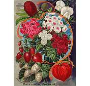 17 Best Images About Seed Catalog Illustrations On