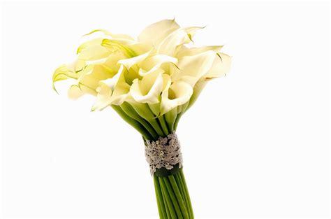 fiori calla significato calla significato fiori linguaggio dei