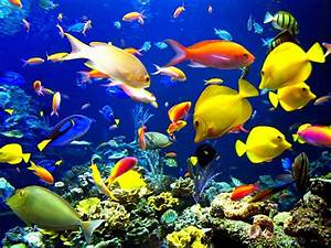 Aquarium wallpaper free