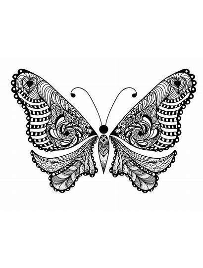 Coloring Adults Animals Pages Animal Butterfly Adult