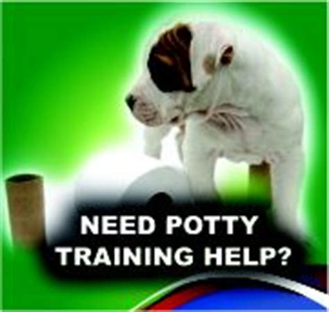 south florida dog trainers  advisors dog training