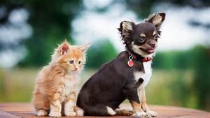 Wallpaper, Puppy, Kitten, Funny, Animals, 4k, Animals, 16150