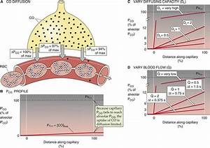 Diffusion And Perfusion Limitations On Gas Transport - Gas Exchange In The Lungs