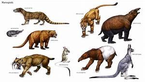 Marsupials Mammals Examples