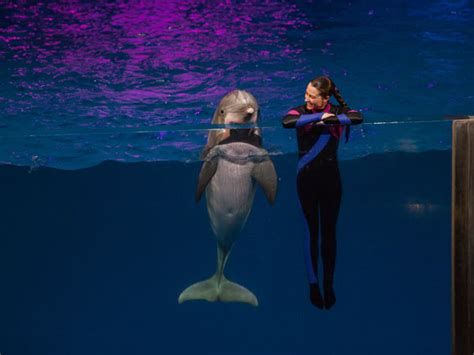 A Chat With A Georgia Aquarium Dolphin Trainer
