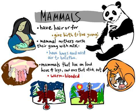 kids corner mammal page
