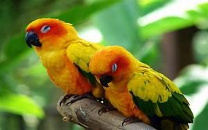 Parot Sleeping Bird Wallpapper Hd   Wallpapers13 Com