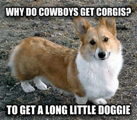 Funny Corgi Memes - livememe com bad joke corgi