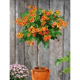 arbre en pot pour balcon les 25 meilleures id 233 es concernant arbuste en pot sur arbuste a fleur jaune plantes