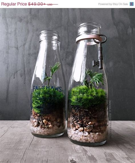 sale milk bottle terrarium  plants vintage