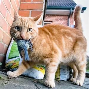 Balkonschutz Für Katzen : kastrationspflicht vorgeschlagen wie gef hrlich sind katzen f r v gel n ~ Eleganceandgraceweddings.com Haus und Dekorationen