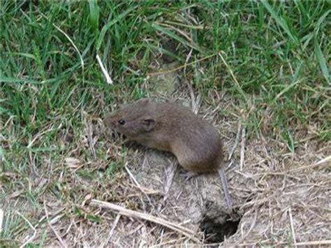 Welche Maus Ist Das?  Mein Schöner Garten Forum