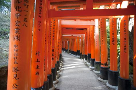 stock photo  torii gate tunnel freeimageslive