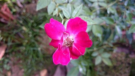 วอลเปเปอร์ : เบ่งบาน, ปลูก, กลีบดอก, ดอกไม้ป่า, พฤกษศาสตร์ ...