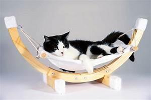 Was Brauchen Katzen : was kostet eine katze ~ Lizthompson.info Haus und Dekorationen