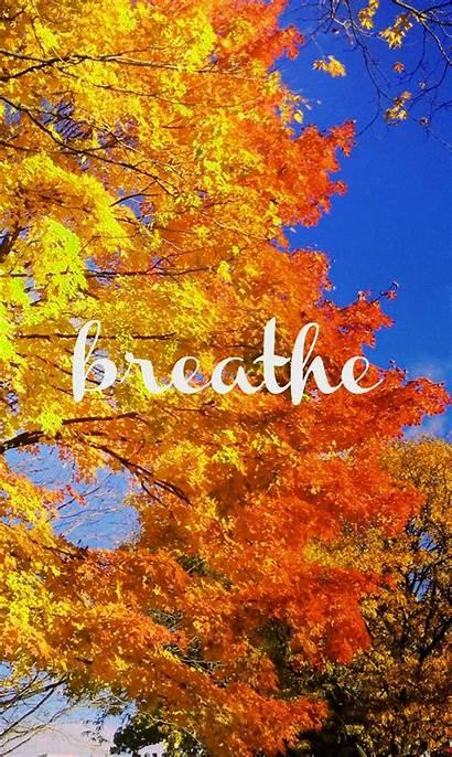 Fall Phone Autumn Season Wallpapers Screensavers Backgrounds