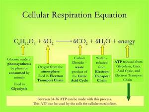 Photosynthesis Equation In Words And Symbols