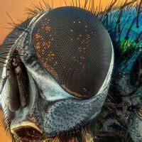 faire fuir les mouches faire fuir les mouches m 233 thode pour lutter contre les