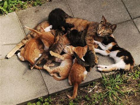 Por Que Una Gata Puede Rechazar A Sus Ga Os La Loca