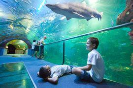 aquarium de donostia san sebasti 225 n aquariums en el pa 237 s vasco turismo euskadi turismo en
