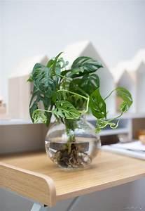 Geranien Vermehren In Wasser : dekorieren mit pflanzen moosb lle mit orchideen selber ~ Watch28wear.com Haus und Dekorationen