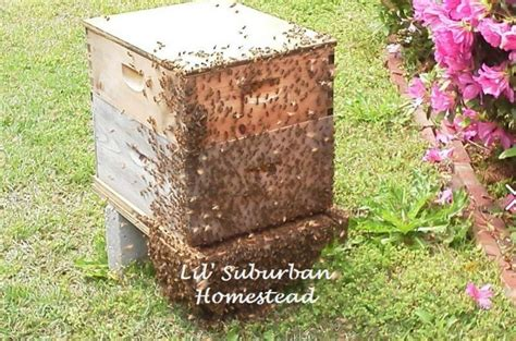 Backyard Honey Bee Hive by Starting Your Beehive