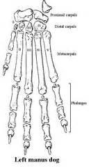 ap  skeletal system chapter  flashcards quizlet