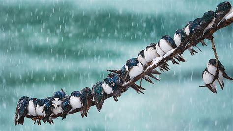 how do birds survive in very cold temperatures all