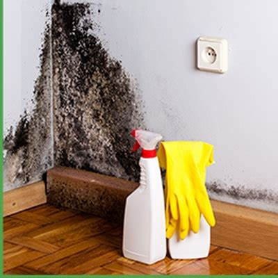 mold removal asbestos abatement contractor  york