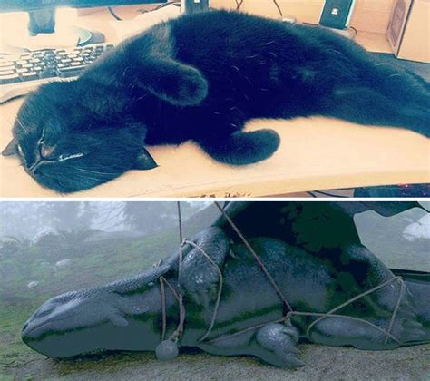 black cats    toothless  disguise
