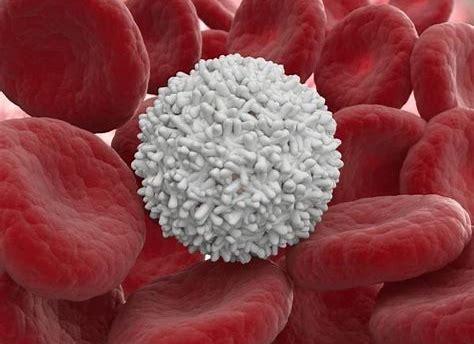 Resultado de imagen de leucocitos