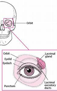 Protective Features Of The Eyes - Eye Disorders