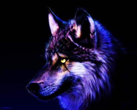 Cool Animal Wallpaper Light Wolf - cool wolf wallpapers wallpapersafari