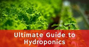 The Ultimate Guide To Hydroponics Farming In 2020  U2013 Small