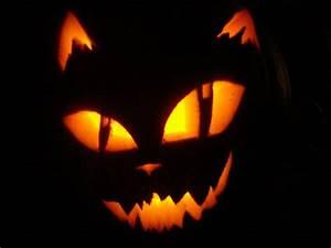 139 best Halloween Cats! images on Pinterest | Halloween ...