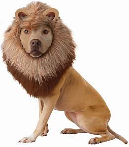 Animal Planet Lion Dog Costume BuyCostumes com