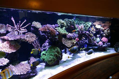 saltwater aquariums beautiful marine aquariums on pinterest reef aquarium aquascaping and saltwater aquarium