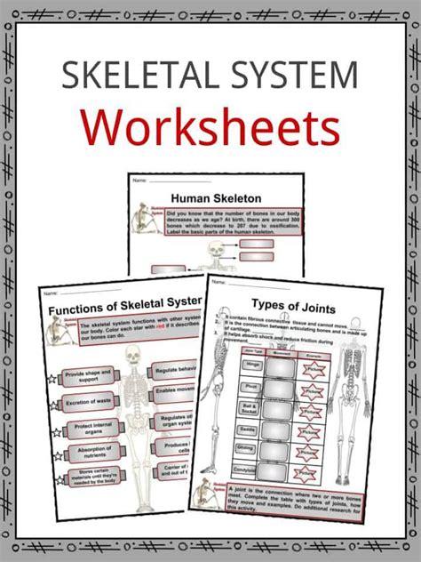 skeletal system facts worksheets bone types