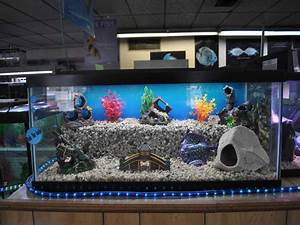 1000+ images about Awesome Fish Tanks on Pinterest   Fish ...
