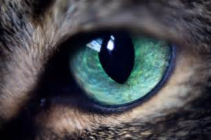 cat s eye cat pet a go go