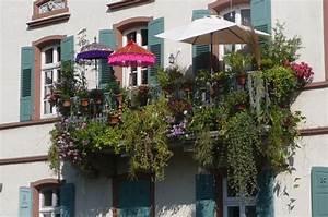 Pflanzen Für Balkon : herabh ngende pflanzen f r balkonk sten seite 1 terrasse balkon mein sch ner garten online ~ Sanjose-hotels-ca.com Haus und Dekorationen