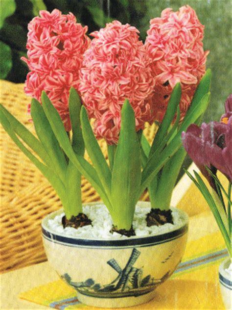 indoor flower bulbs indoor flower pots inside flower bulbs