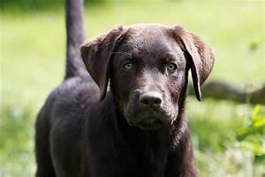 Mietwohnung Mit Hund : hunderassen viele fotos super tipps ~ Lizthompson.info Haus und Dekorationen