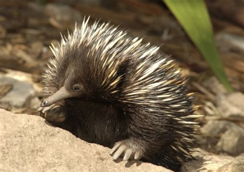 10 Weird and Wonderful Australian Animals