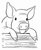 Pig Coloring Printable Animal Farm sketch template