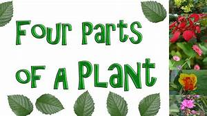 4 Parts Of A Plant Video