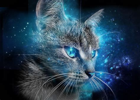 Cat Blue Eyes Wallpaper 2015 By Badrds On Deviantart