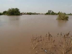 Panoramio - Photo of Flooding River Nile, 尼罗河水漫到路旁