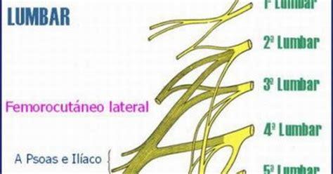 J. Yoncon - Anatomía humana con orientación clínica ...